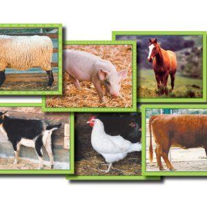Blokkenpuzzel: Boerderijdieren  - 101 -